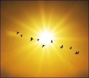 Dezső Anna Zanami vers nap öröm hála alázat remény...